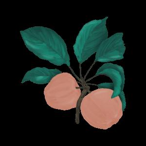 BM—Apple 1